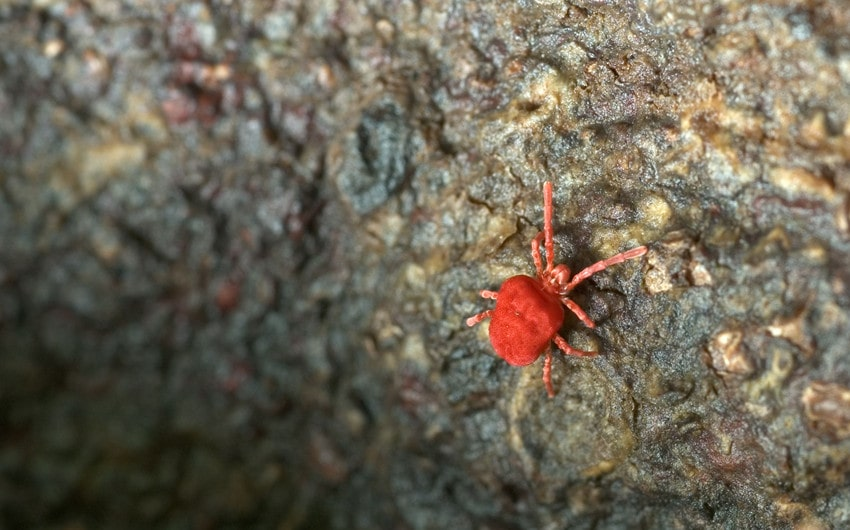 tiny red bugs on concrete